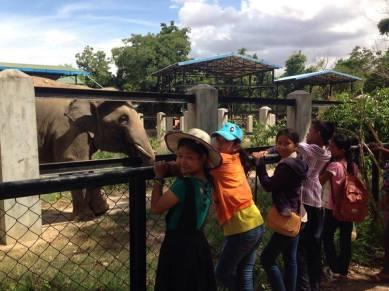 Tamaop Zoo 4