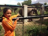 Tamaop Zoo 5